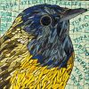 Connecticut-Warbler